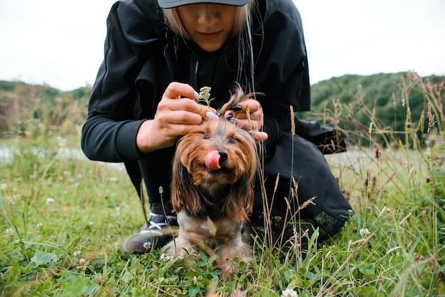 Gastvrouw doet grappig kapsel voor haar huisdier buitenshuis. meisje en yorkshire terrier voor wandeling in het park.