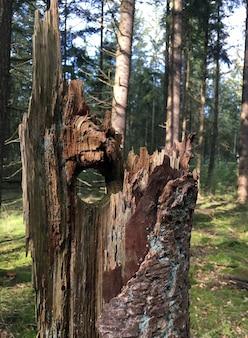 Gat in een gebroken boom in het bos in de herfst