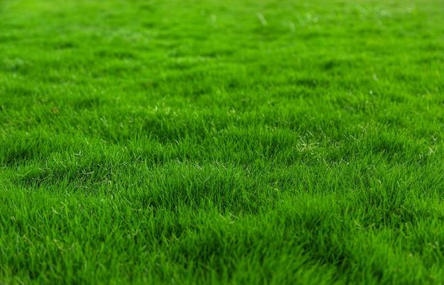 Gazon gras close-up groen veel