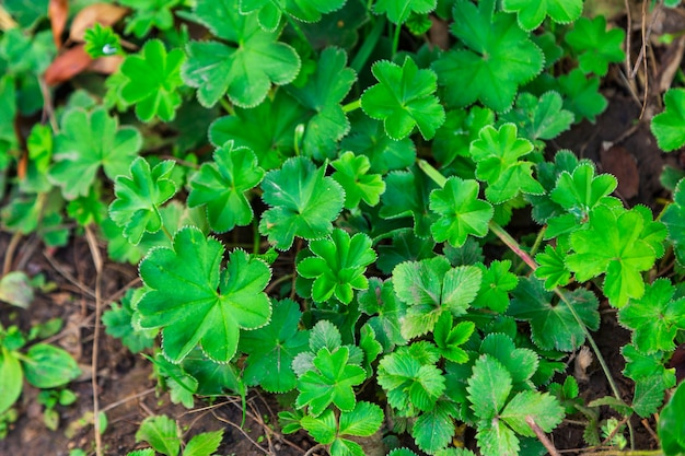 Gazon textuur met groene bladeren