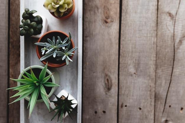 Geassorteerde cactussen, cactussen en vetplanten op grijze betonnen standaard op houten tafel. tuinieren hobby concept.