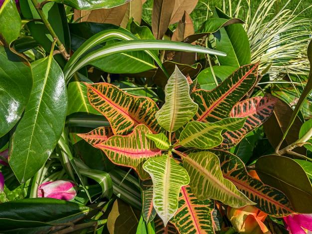 Geassorteerde ingemaakte groene kamerplanten buitenshuis.