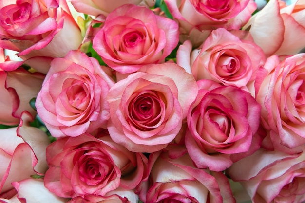 Geassorteerde rozenhoofden. diverse zachte rozen en bladeren verspreid over een vintage achtergrond, bovenaanzicht