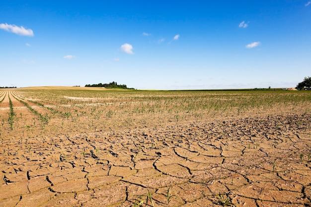 Gebarsten aarde door gebrek aan water op het veld, waar ze maïs verbouwen.