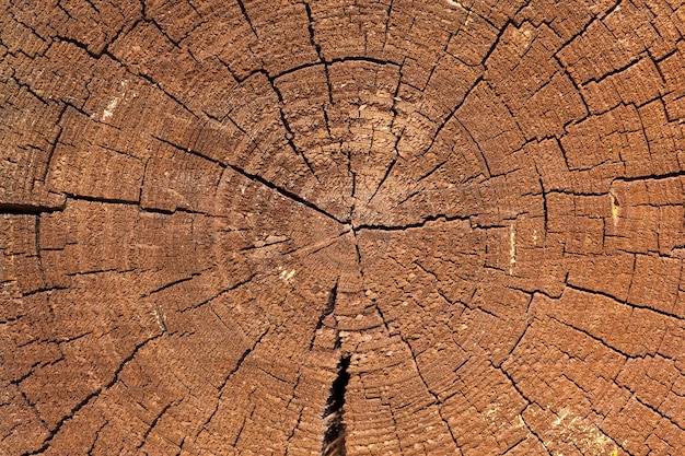 Gebarsten boomstam in de muur van een houten huis