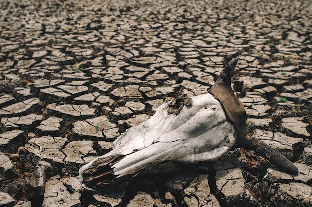 Gebarsten droog land zonder water