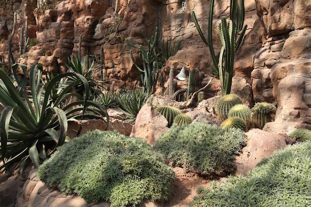 Gebarsten uitgedroogd land na een droogte