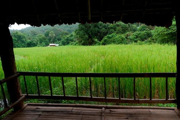 Gebied dat van een schaduwgebied wordt bekeken, thailand