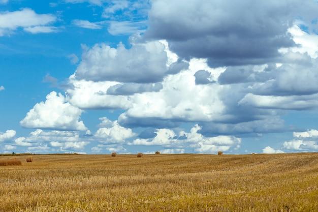 Gebied met tarwe en stapels tegen de blauwe hemel met wolken op een de zomerdag