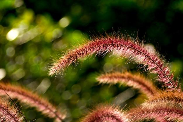 Gebied van de aard van de achtergrond grasbloem zachte nadruk