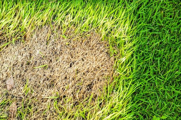 Gebied van droog gras kan niet groeien, iets bedekt dit en heeft geen zonlicht