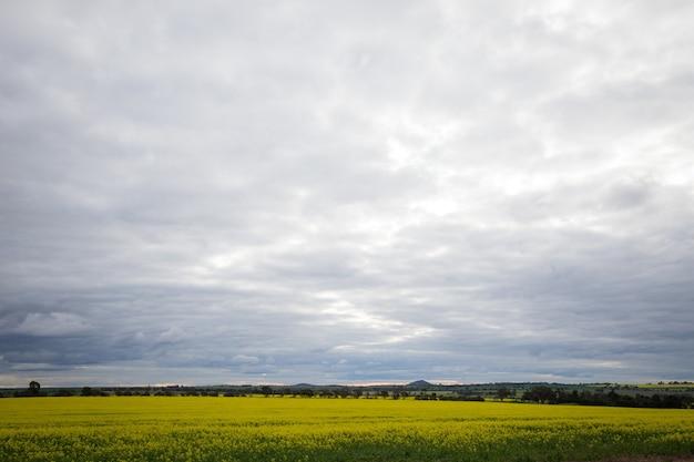 Gebied van gele bloemen met heuvels onder een bewolkte hemel