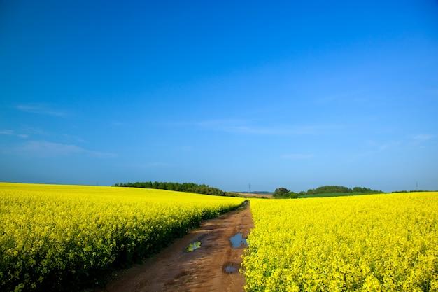 Gebied van gele bloemen