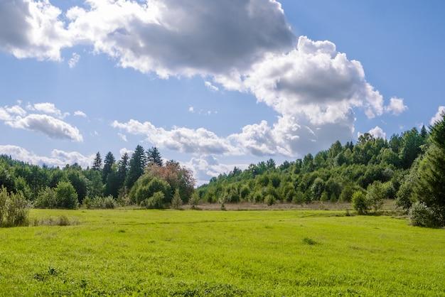 Gebied van gras met bossen en perfecte blauwe hemel