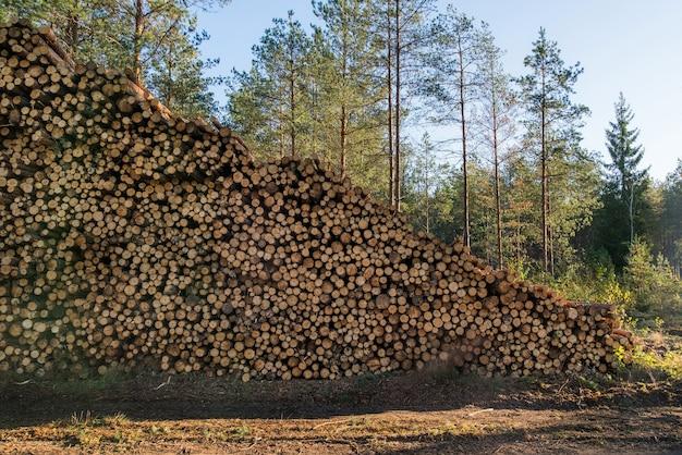 Gebied van illegale ontbossing van vegetatie in het bos, stapel gekapt hout in de buurt van het bos.