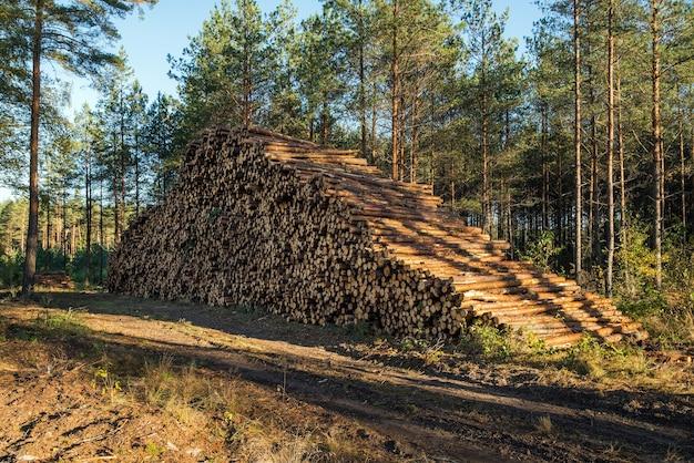 Gebied van illegale ontbossing van vegetatie in het bos.
