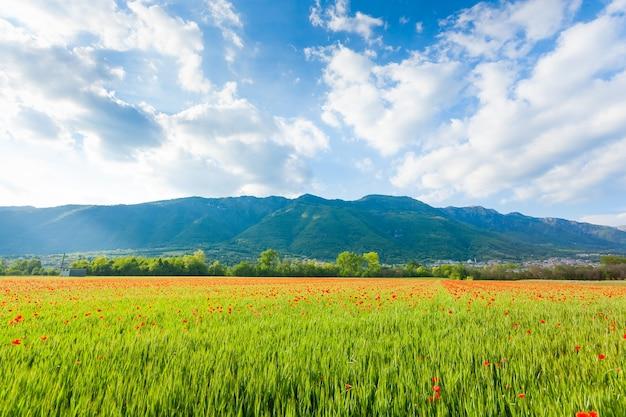 Gebied van rode papavers met bergen op achtergrond. plattelandsleven. italiaans landschap Premium Foto