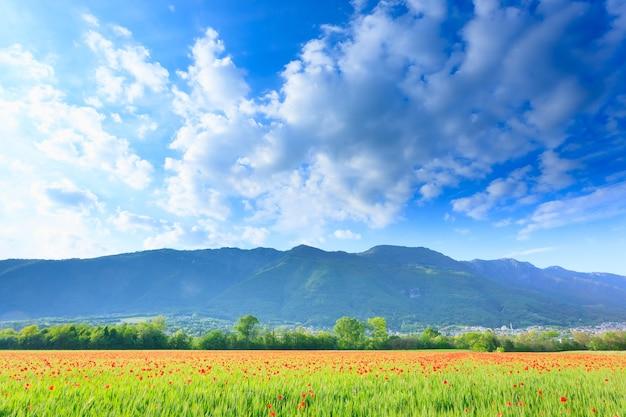 Gebied van rode papavers met bergen op achtergrond. plattelandsleven. italiaans landschap
