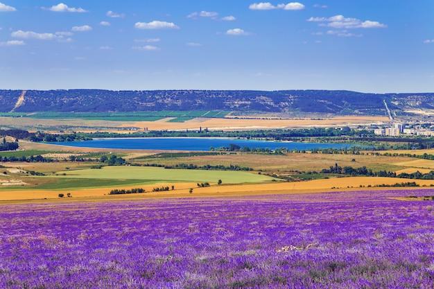Gebied van tarwe en lavendel veld in de krim.