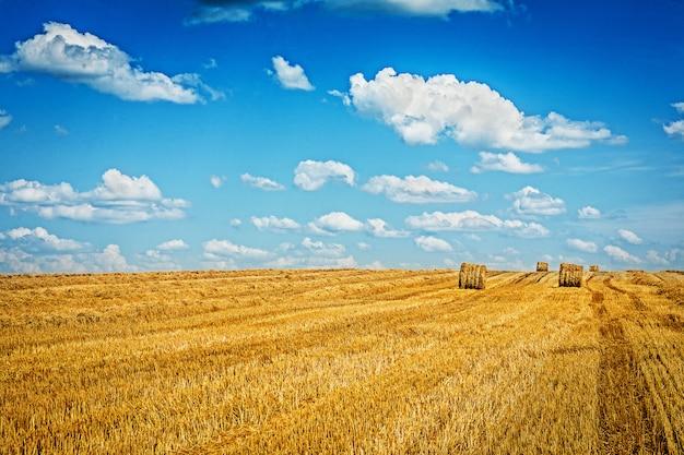 Gebied van tarwe na het oogsten