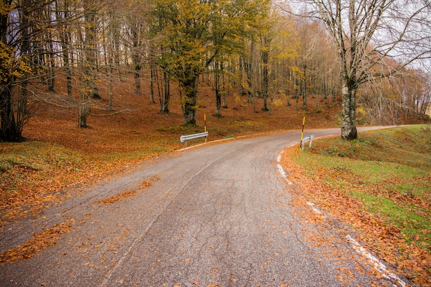 Gebladerte in het nationale park van monti simbruini, lazio, italië