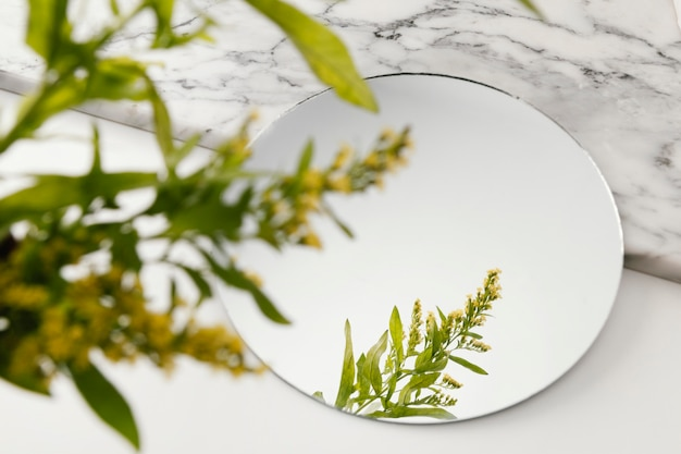 Gebladerte spiegelen in spiegel