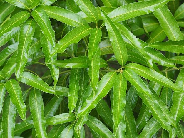 Gebladertestruiken in een tropische tuin na regen. zomer natuur na regen.