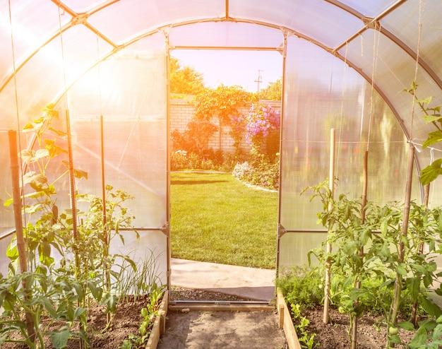 Gebogen kleine serre op prive-achtertuin met zonnevlam