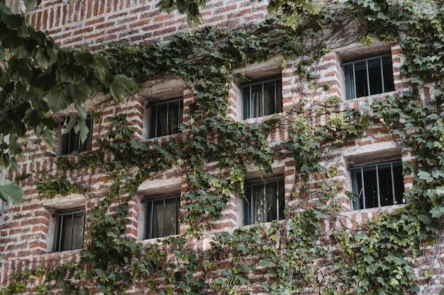 Gebouw in de stad bedekt met wijnstokken