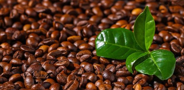 Gebrande bruine koffiebonen op een grijze achtergrond