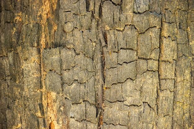 Gebrande houten textuurachtergrond. concept van natuurbehoud en opwarming van de aarde.