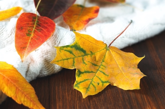 Gebreide witte trui met rode en oranje herfstbladeren
