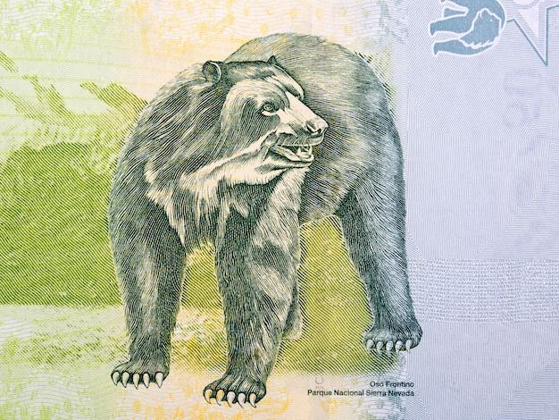 Gebrilde beer illustratie van venezolaans geld