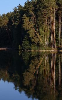 Gebroken boombezinning over waterspiegel