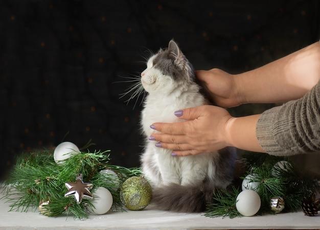 Gebroken kerstversiering en kat