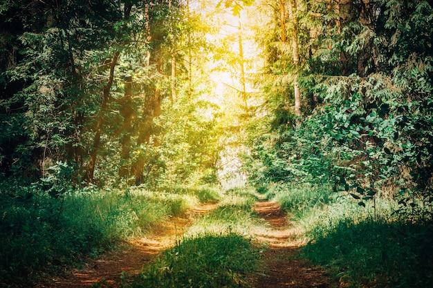 Gedeeltelijk wazig creatieve achtergrondafbeelding van zandpad in zomerbos, tussen gras en bomen