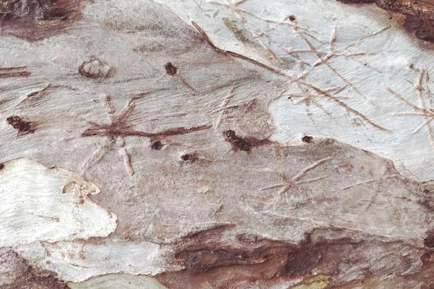 Gedetailleerde houten textuur van boomachtergrond