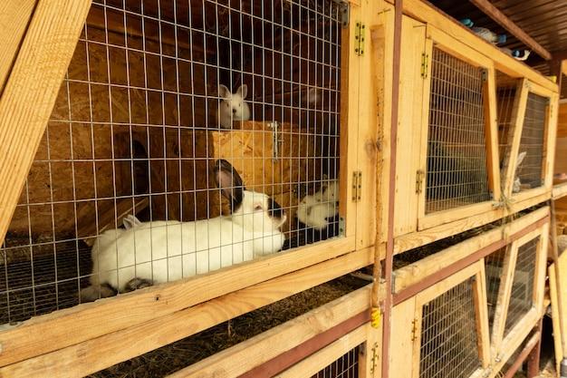 Gedomesticeerde konijnen in kooien. inhoud, fokken in gevangenschap.