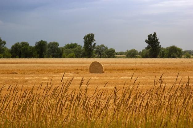 Gedraaide hooiberg op een landbouwveld tegen de achtergrond van de herfsthemel. ruimte kopiëren.