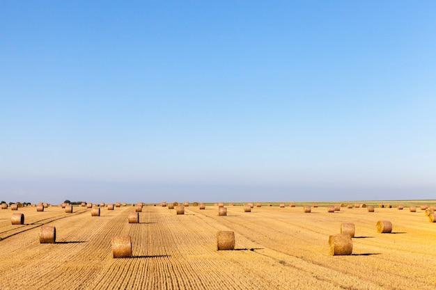 Gedraaide stapels stro na het oogsten van gerst in de zomer, landschap