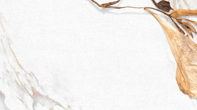 Gedroogd blad frame botanische achtergrond