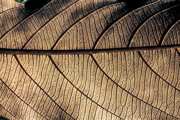 Gedroogd blad