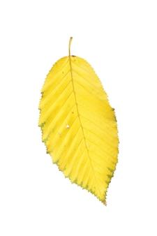 Gedroogd geïsoleerd de herfstblad