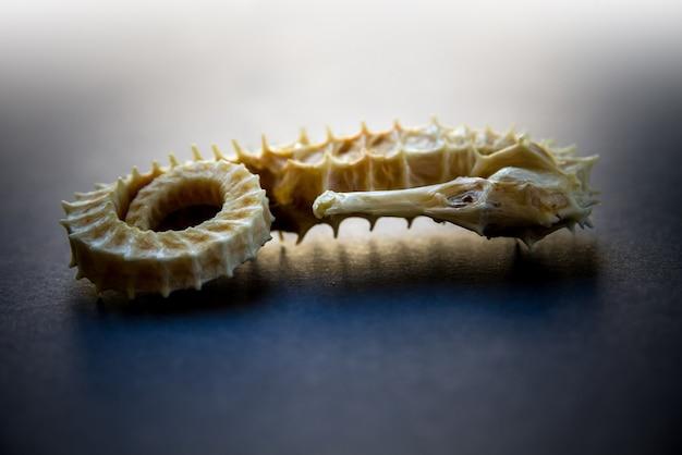 Gedroogd zeepaardje skelet op een zwarte achtergrond