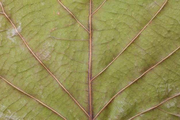 Gedroogde bladachtergrond.