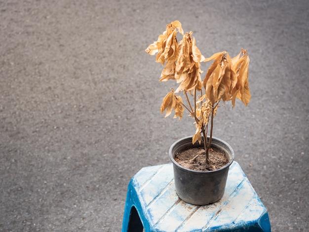 Gedroogde bladeren aan de boom veroorzaakt door opwarming van de aarde.