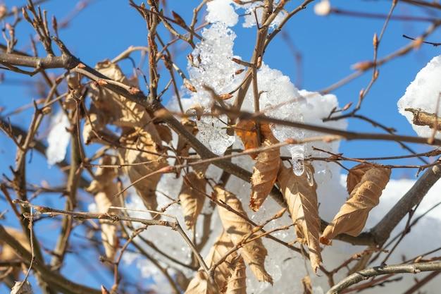 Gedroogde bladeren en sneeuw erop