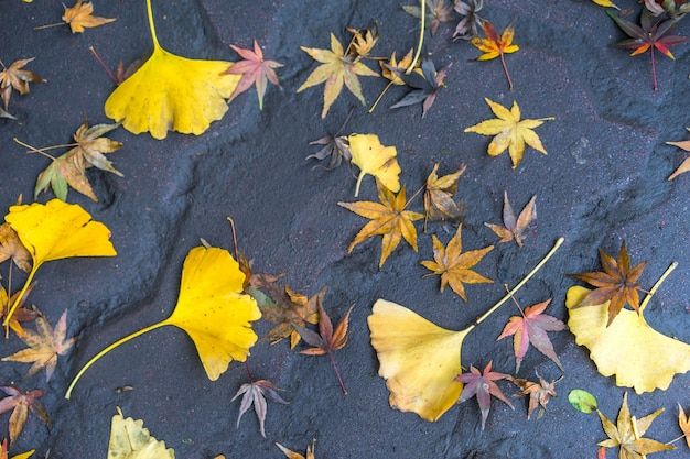 Gedroogde bladeren op de grond