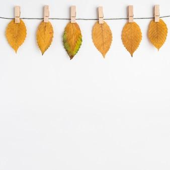 Gedroogde bladeren op dunne draad
