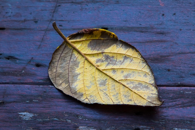 Gedroogde bladeren